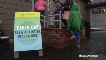 New York City residents work to build up the urban bee population