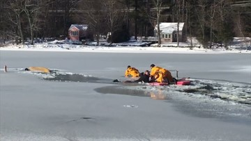 Dog and owner rescued from icy pond