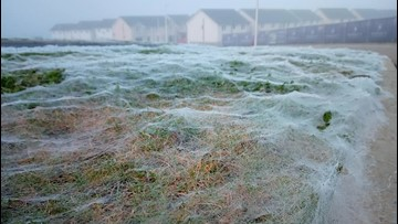 It's Not Frost Covering This Field, It's a Giant Spider Web