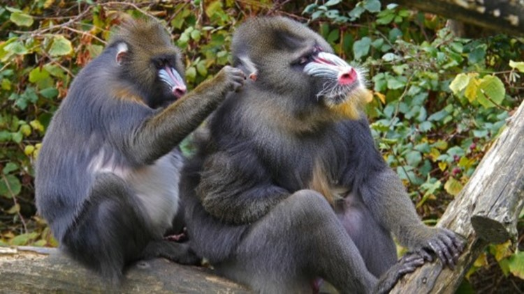 Are Animals Using Social Distancing to Protect Themselves from Infections?
