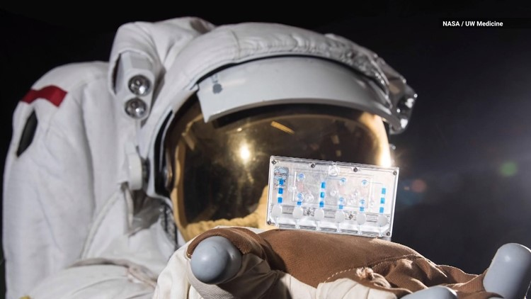 Why is This Kidney-on-a-Chip Getting Launched into Space?