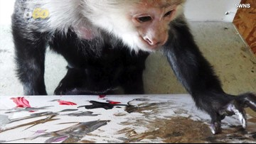 These Monkeys Benefit Twice from One Donation by Ricky Gervais