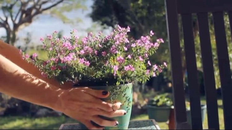 Springtime Means Getting Your Garden Ready! How to do it the Right Way!