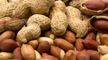 New drug promises protection for people with peanut allergies