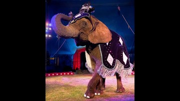 New Jersey becomes first state to ban wild animal circus acts