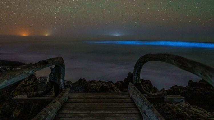 Waters off Washington coast glow blue with bioluminescence