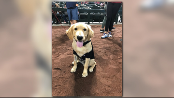 Hero pup that saved his owner from rattlesnake honored at Diamondbacks game