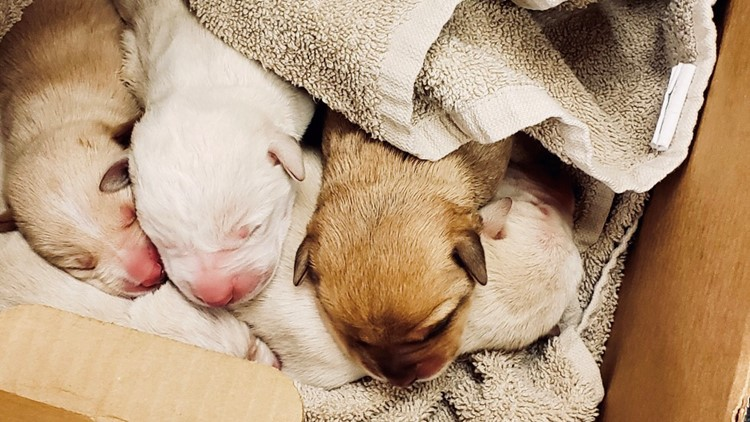 5 newborn puppies abandoned at Clayton park