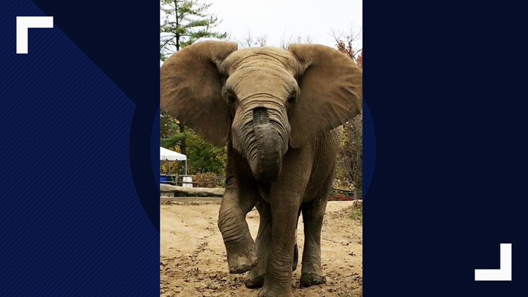 Elephant Max passes away one week after 2 others died at Grant's Farm