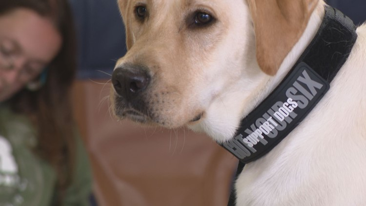 Veterans with PTSD receive support dogs
