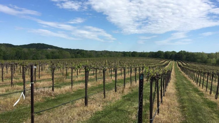 Hoffmanns can't wait for you to come 'halfway to heaven' to see Missouri's new wine destination