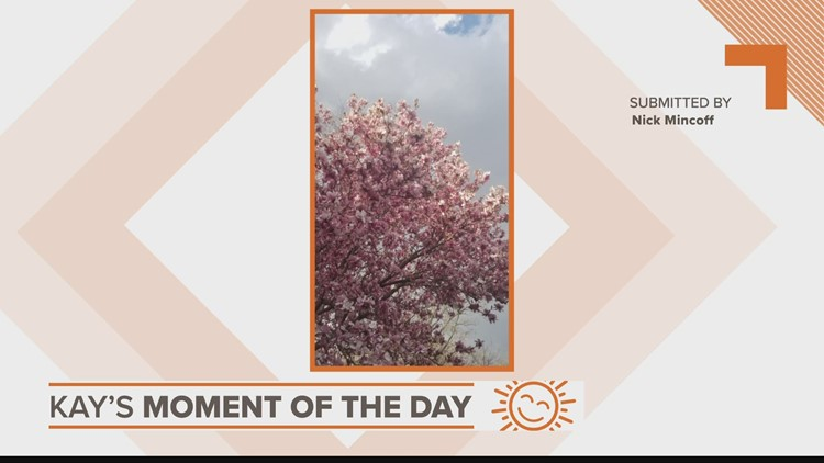 Kay's Moment of the Day | April 2, 2021