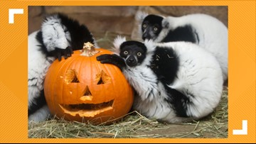 Saint Louis Zoo's Boo at the Zoo canceled Wednesday night