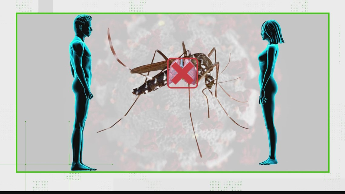 VERIFY: No, mosquitoes cannot spread COVID-19 after it bites an infected person
