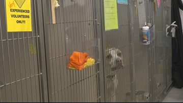Gateway Pet Guardians to open giant pet facility in East St. Louis