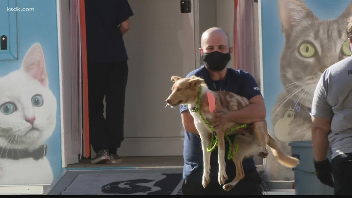 97 dogs removed from facility in southwestern Missouri