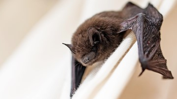 Bat tests positive for rabies in Madison County