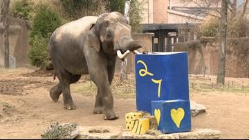 Saint Louis Zoo celebrates Raja's 'golden' 27th birthday