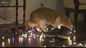 How to keep your kitty's safe around of your Christmas tree