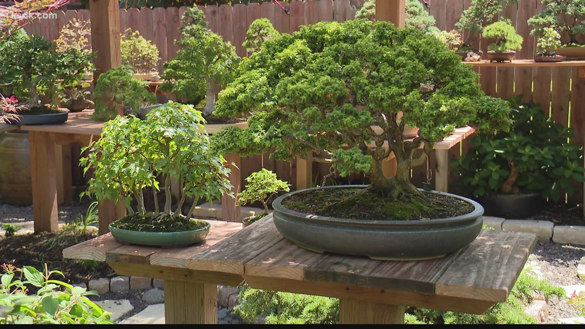 Local man says caring for bonsai trees relieves stress