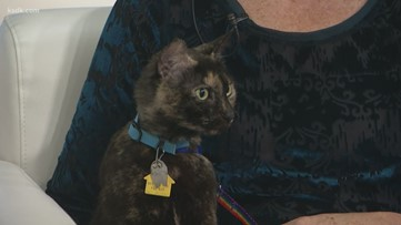 The benefits of adopting a senior pet