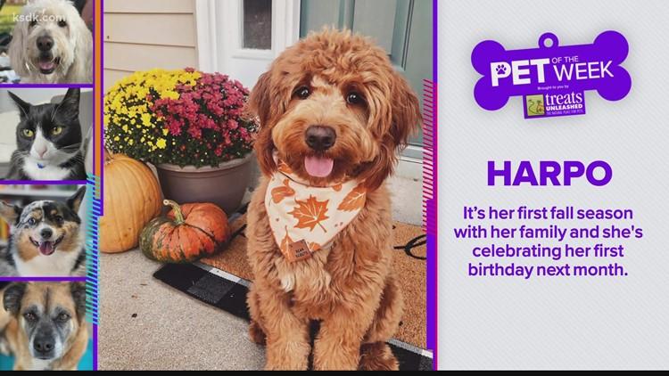 Treats Unleashed Pet of the Week: Harpo
