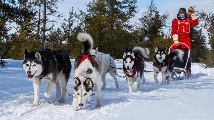 This Hillsboro sled dog team is loving the snow
