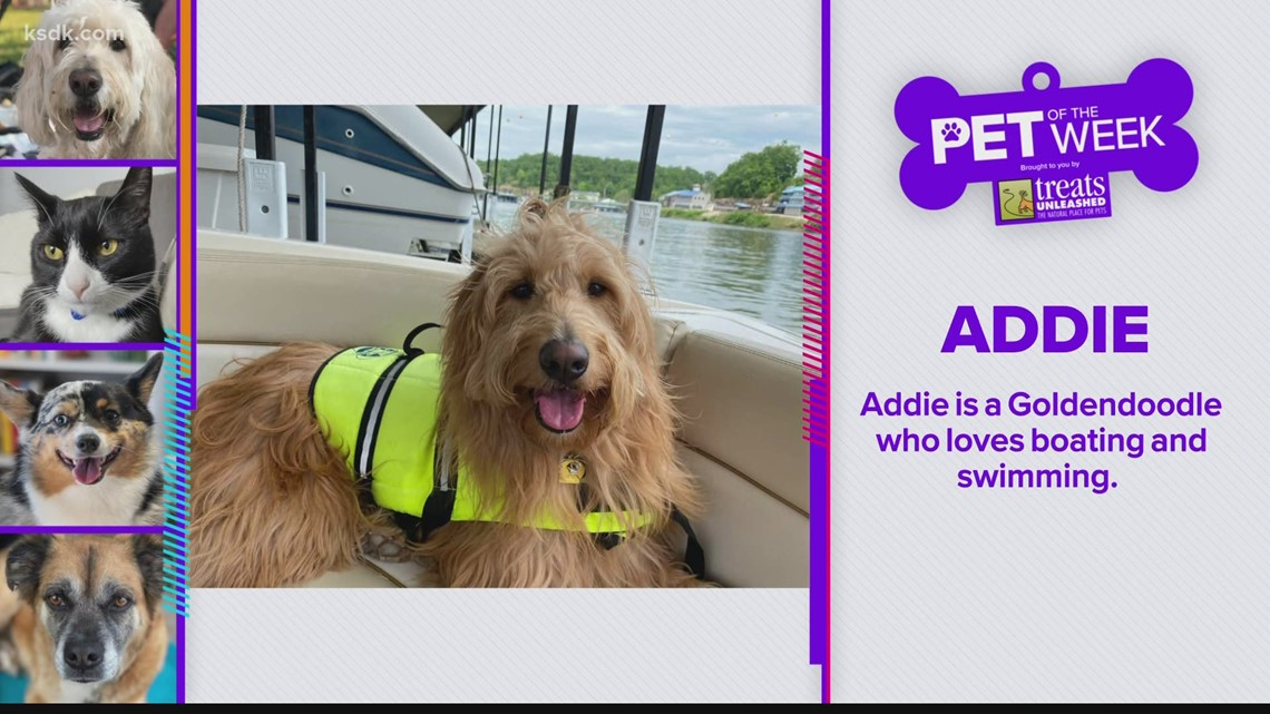 Treats Unleashed Pet of the Week: Addie