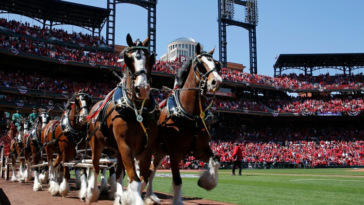 Commentary | This Opening Day in St. Louis is more special than most