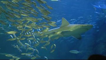 'Under the Deep Brew Sea' at St. Louis Aquarium