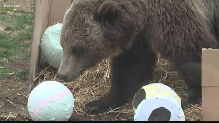Saint Louis Zoo holding Zootoberfest this October