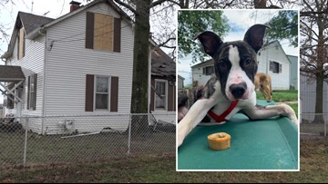 Outside light likely started fire that destroyed home for special needs dogs