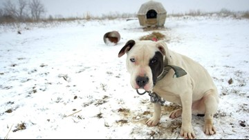 Dog fighting is still a thing, and this photographer is on a mission to end it