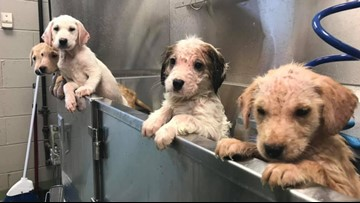 10 sick puppies rescued by Stray Rescue of St. Louis named after strong women in history