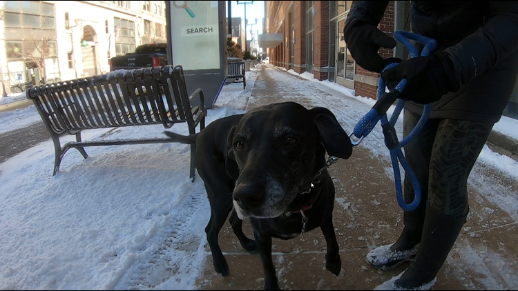 Stray electric current hazard shocks dogs in downtown St. Louis