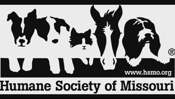 Humane Society of Missouri closes adoption shelters until stay-at-home order is lifted