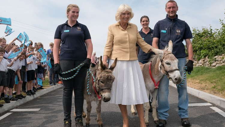 Camilla Duchess of Cornwall with William and Harry donkeys