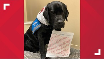 'It may be a ruff series' | Therapy dogs friendly wager on NLCS