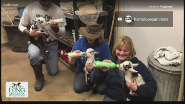 Humane Society of Missouri offering delivery with baby goat adoptions