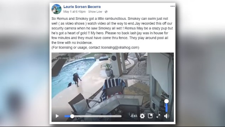 Dog dives into pool to save drowning friend
