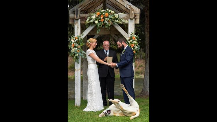 dogwedding_1533242008950.jpg