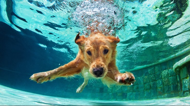 After Labor Day, many recreation and aquatic centers will stay open for a pooch pool party.