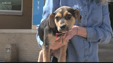 Humane Society offering curbside adoptions while centers are closed to the public