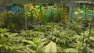 Missouri doctors reluctant to certify for medical marijuana