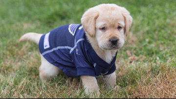 Blues adopt future assistance dog and you can help name him