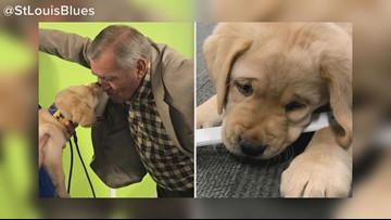 The Blues' puppy has a name!