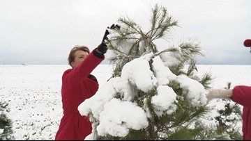 TISL Holiday Survival Guide: How to pick the perfect Christmas Tree