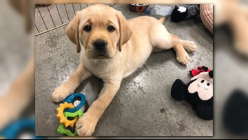 Meet the Blues puppy Barclay and his adorable siblings