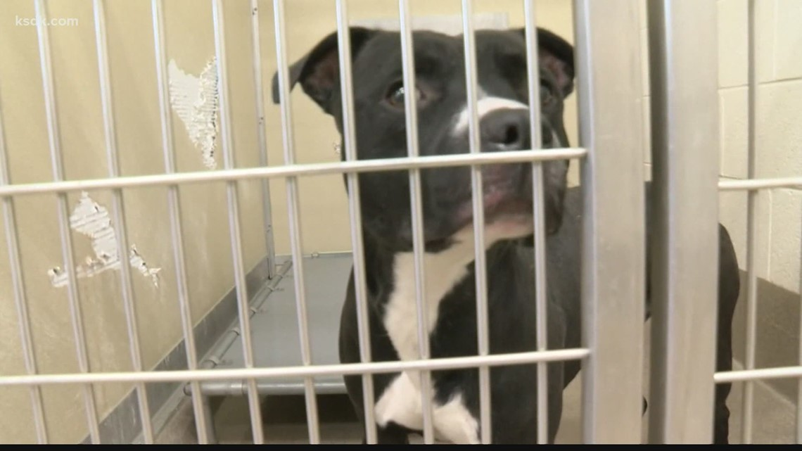 Stray Rescue animal shelter at maximum capacity