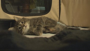 Animal rescue fundraiser backfires for controversial pet business